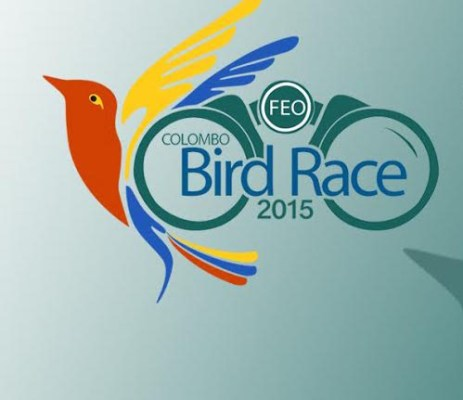 colombo-bird-race new