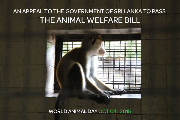 Animal Welfare Bill